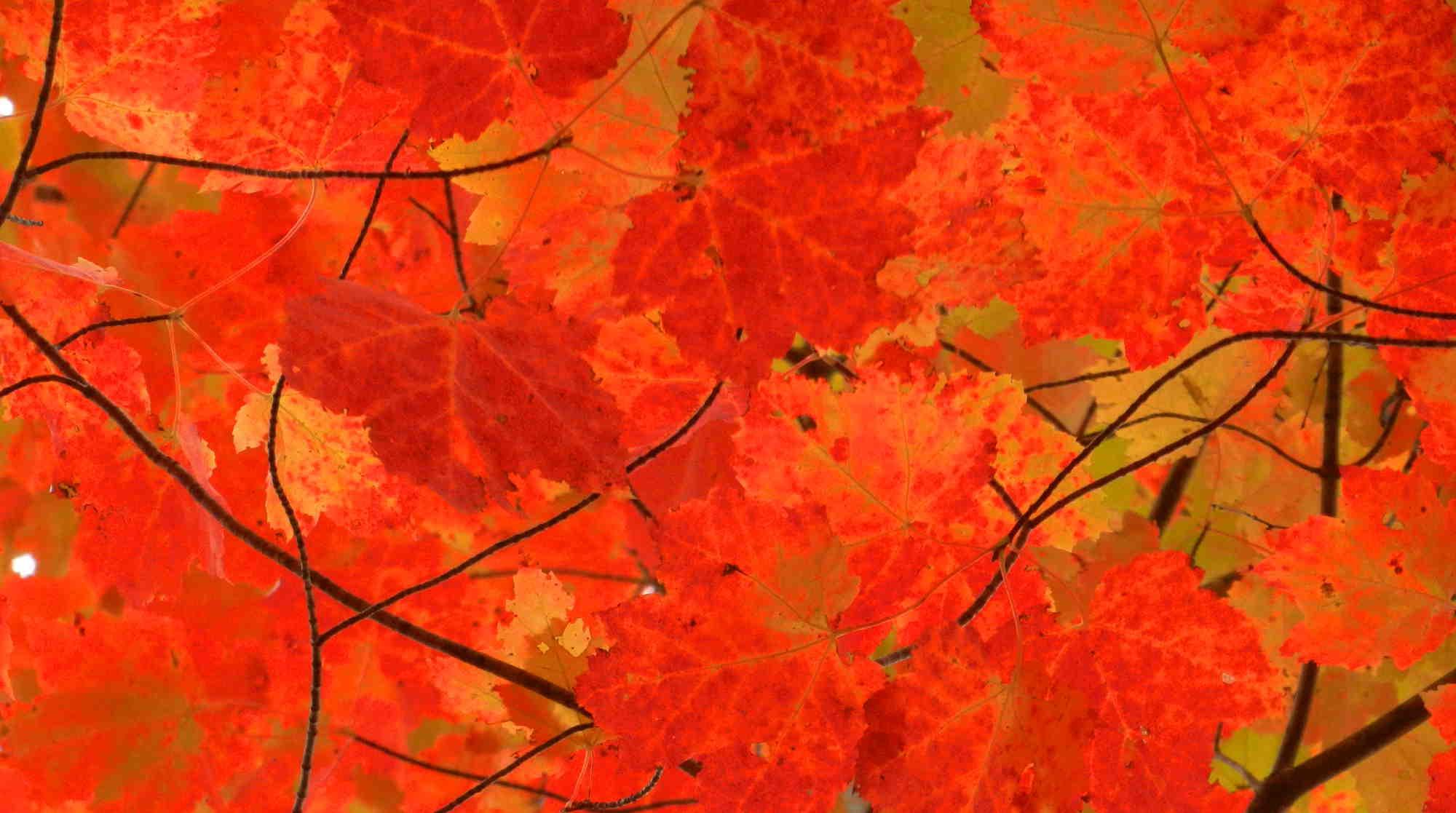 5_autumn_leaves.jpg